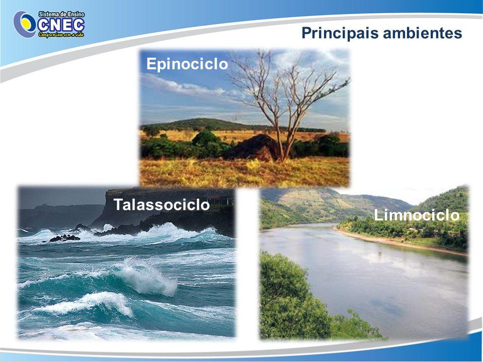 Talassociclo Epinociclo Limnociclo Principais ambientes
