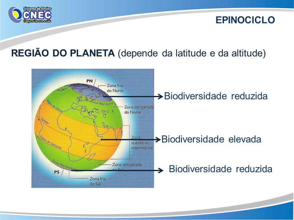 REGIÃO DO PLANETA (depende da latitude e da altitude) Biodiversidade reduzida Biodiversidade elevada Biodiversidade reduzida EPINOCICLO