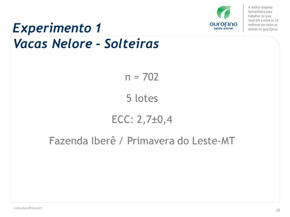 www.ourofino.com 20 Experimento 1 Vacas Nelore - Solteiras n = 702 5 lotes ECC: 2,7±0,4 Fazenda Iberê / Primavera do Leste-MT