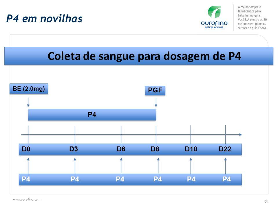 www.ourofino.com 54 P4 em novilhas Coleta de sangue para dosagem de P4 P4 D0 D3 D6 D8 D10 D22 BE (2,0mg) PGF P4 P4 P4