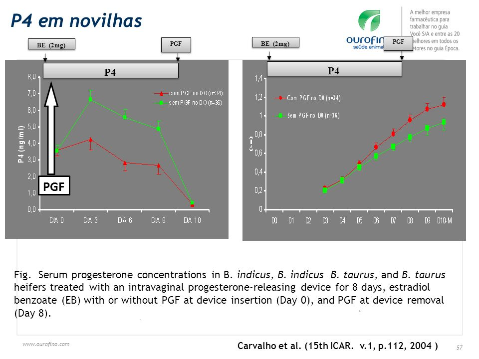 www.ourofino.com 57 -,. Fig. Serum progesterone concentrations in B. indicus, B. indicus B. taurus, and B. taurus heifers treated with an intravaginal