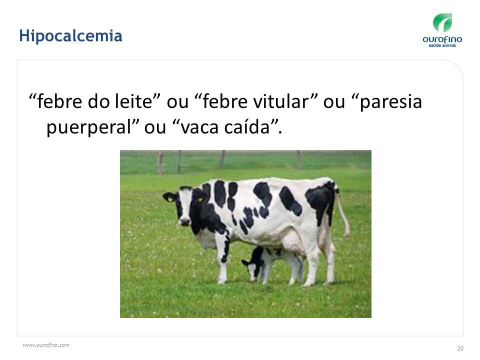 www.ourofino.com 20 febre do leite ou febre vitular ou paresia puerperal ou vaca caída. Hipocalcemia