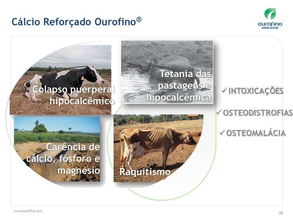 www.ourofino.com 28 INTOXICAÇÕES INTOXICAÇÕES OSTEOMALÁCIA OSTEOMALÁCIA Colapso puerperal hipocalcêmico Carência de cálcio, fósforo e magnésio Raquiti