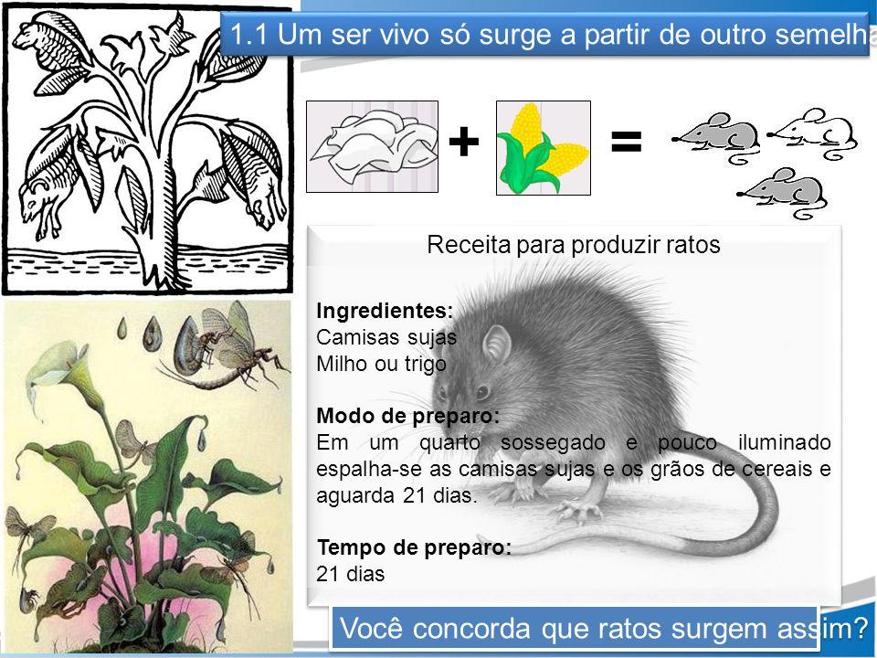 1.1 Um ser vivo só surge a partir de outro semelhante += Receita para produzir ratos Ingredientes: Camisas sujas Milho ou trigo Modo de preparo: Em um