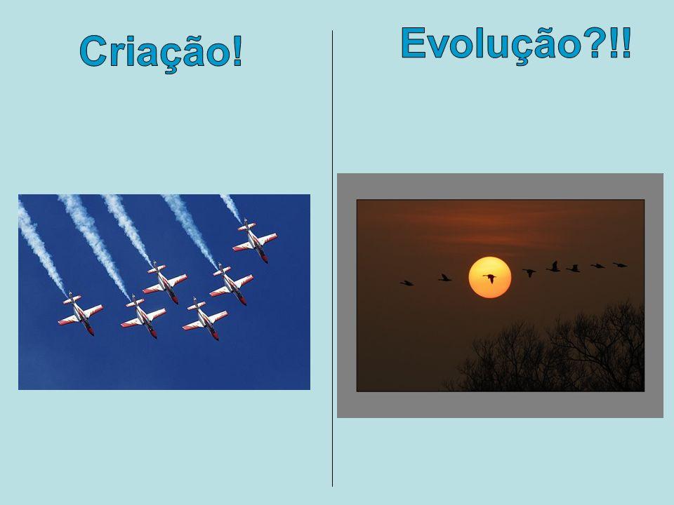 Criação! Evolução?!!