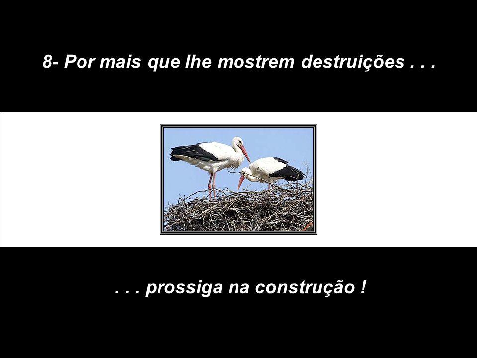 8- Por mais que lhe mostrem destruições...... prossiga na construção !