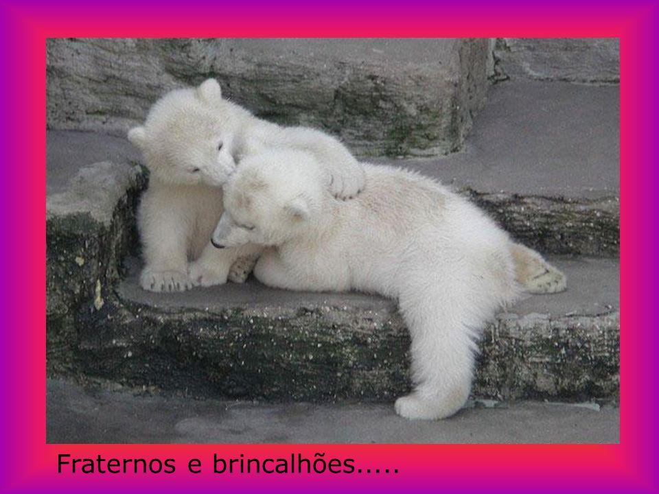 Maternos....