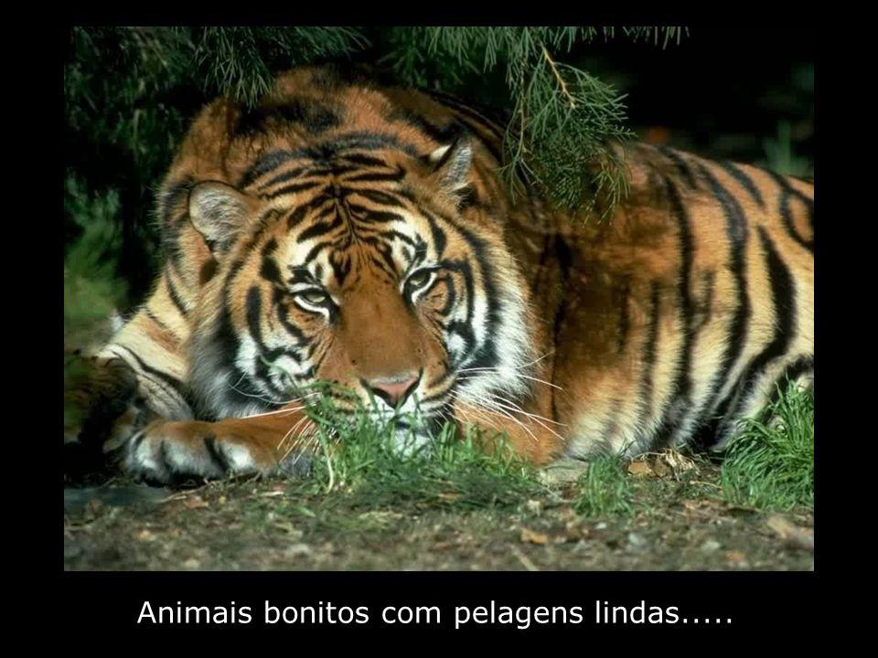 Animais bonitos com pelagens lindas.....