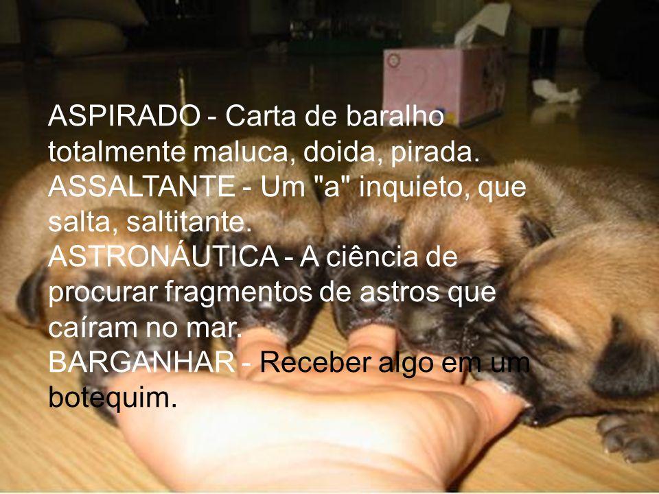 BARRACÃO - Proíbe a entrada de caninos.BIMESTRE - Mestre em duas artes marciais.