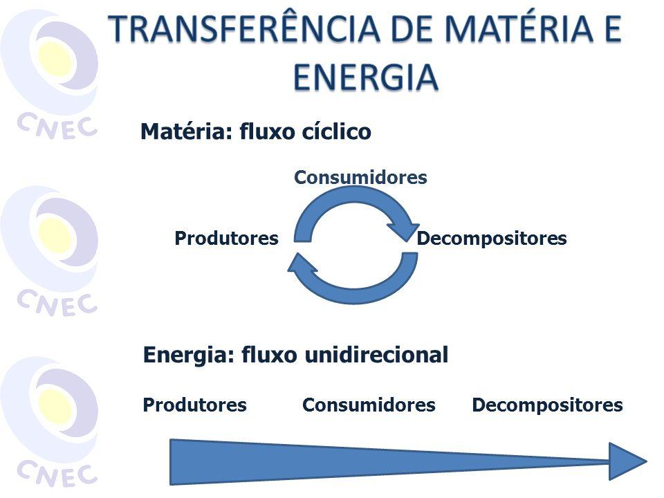 Matéria: fluxo cíclico Produtores Decompositores Energia: fluxo unidirecional Produtores Consumidores Decompositores Consumidores