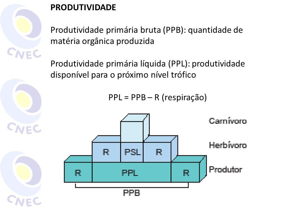 PRODUTIVIDADE Produtividade primária bruta (PPB): quantidade de matéria orgânica produzida Produtividade primária líquida (PPL): produtividade disponí