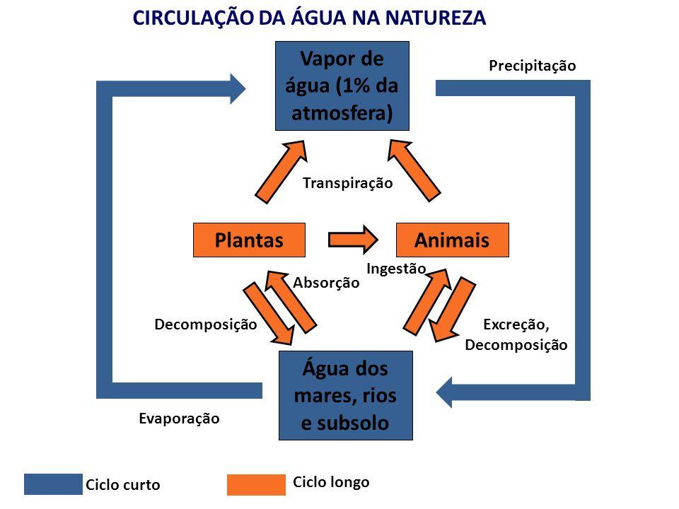 CIRCULAÇÃO DA ÁGUA NA NATUREZA Vapor de água (1% da atmosfera) Água dos mares, rios e subsolo PlantasAnimais Excreção, Decomposição Ingestão Absorção