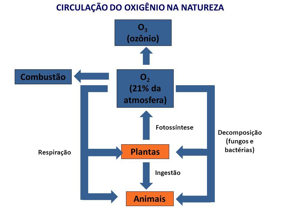 CIRCULAÇÃO DO OXIGÊNIO NA NATUREZA O 2 (21% da atmosfera) Plantas Animais Decomposição (fungos e bactérias) Ingestão O 3 (ozônio) Combustão Respiração