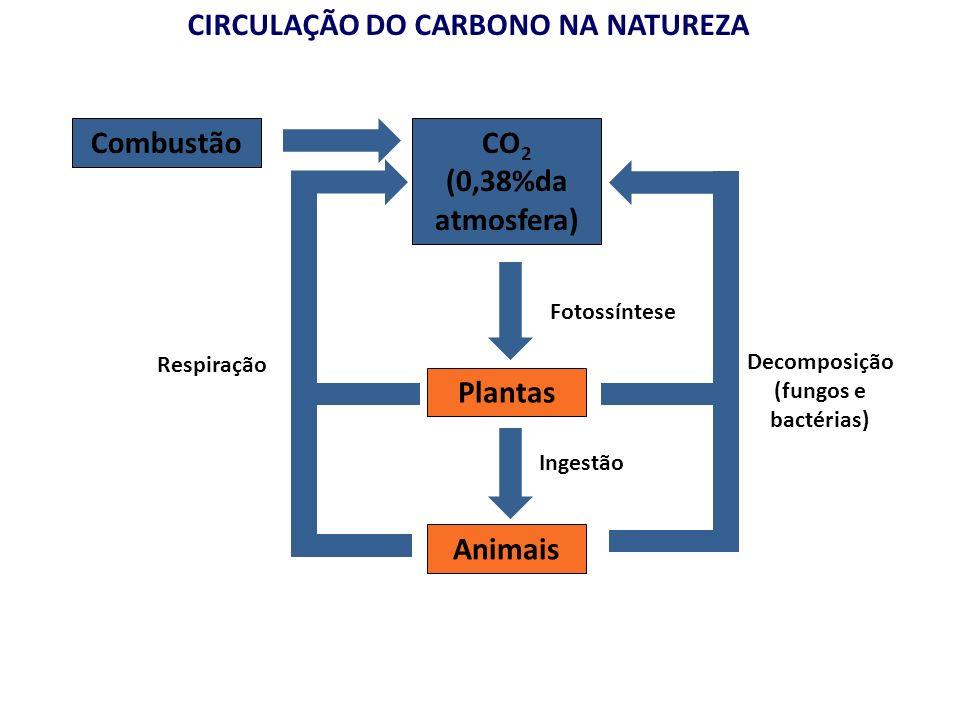 CIRCULAÇÃO DO CARBONO NA NATUREZA CO 2 (0,38%da atmosfera) Plantas Animais Ingestão Combustão Respiração Fotossíntese Decomposição (fungos e bactérias