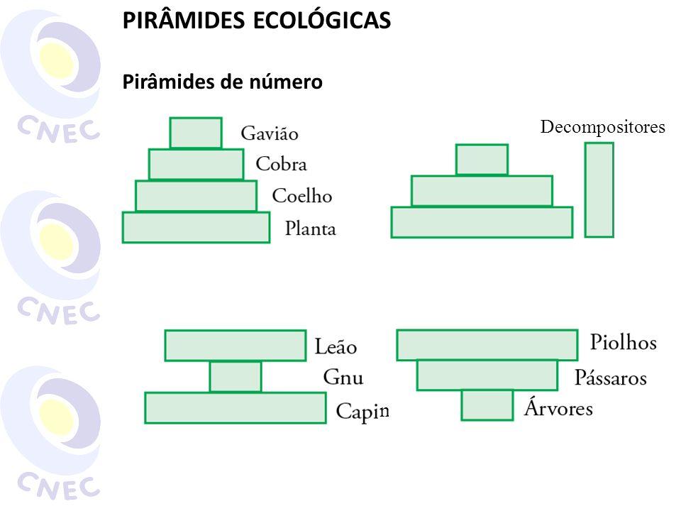 PIRÂMIDES ECOLÓGICAS Pirâmides de número Decompositores m
