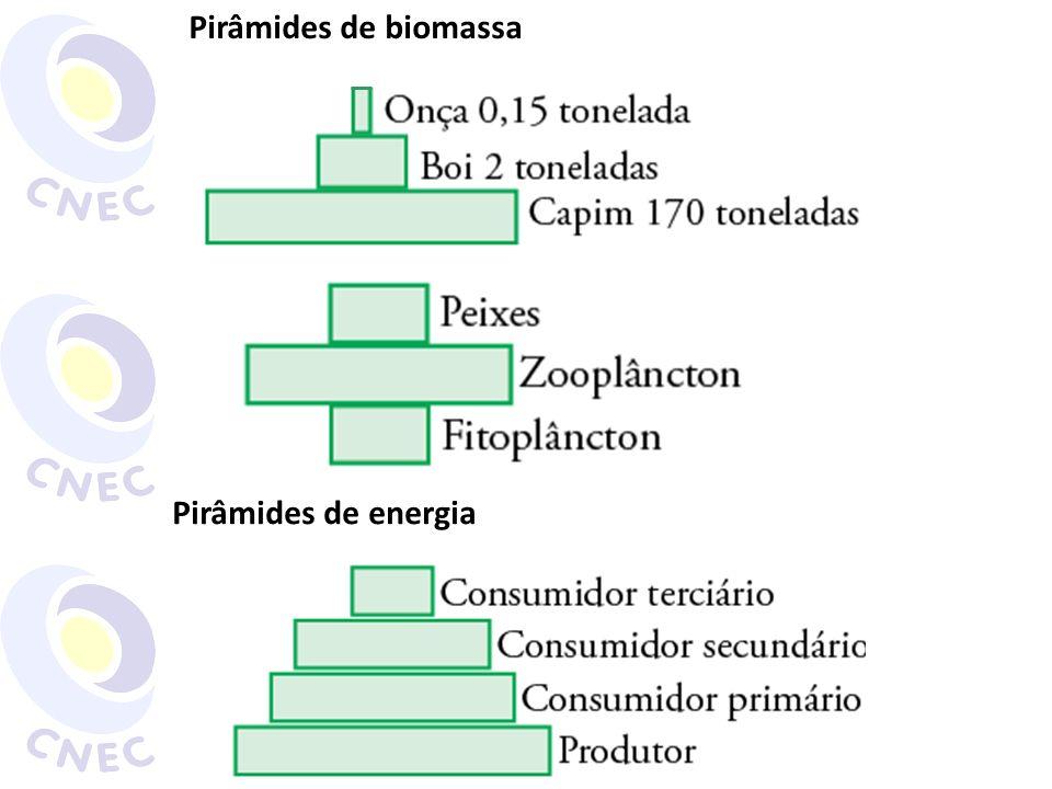 Pirâmides de biomassa Pirâmides de energia