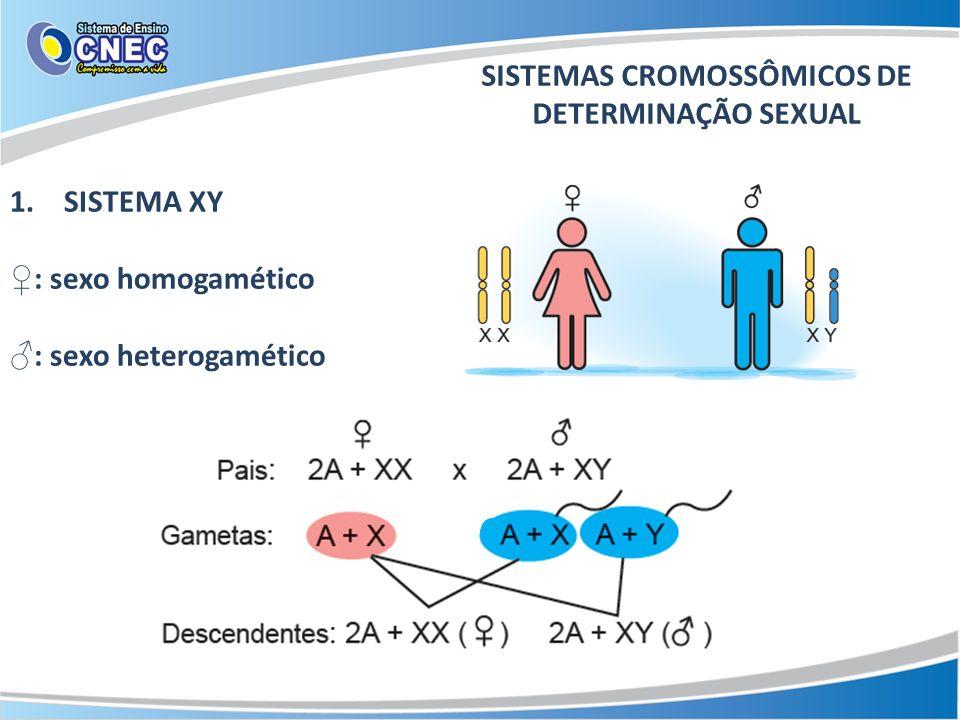 SISTEMAS CROMOSSÔMICOS DE DETERMINAÇÃO SEXUAL 1.SISTEMA XY : sexo homogamético : sexo heterogamético