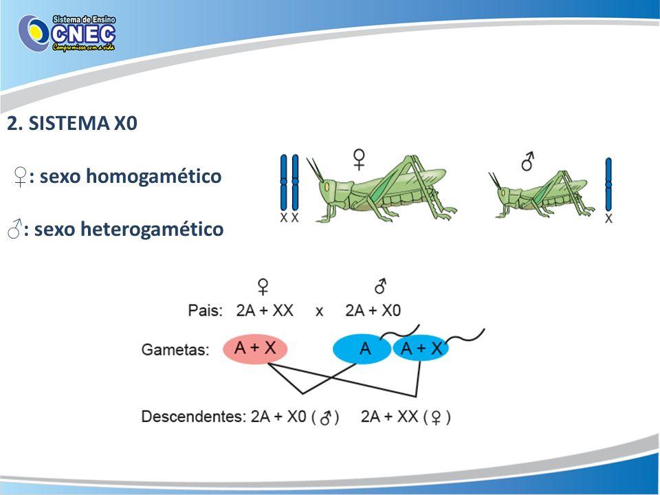 3. SISTEMA ZW : sexo heterogamético : sexo homogamético