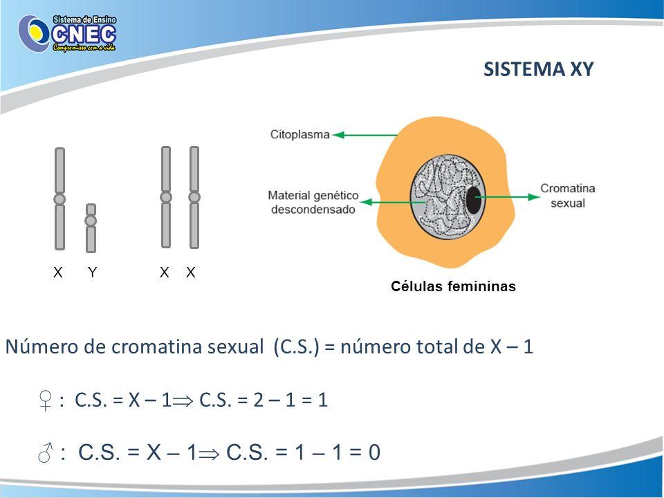 SISTEMA XY Número de cromatina sexual (C.S.) = número total de X – 1 : C.S. = X – 1 C.S. = 2 – 1 = 1 : C.S. = X – 1 C.S. = 1 – 1 = 0 X Y X X Células f