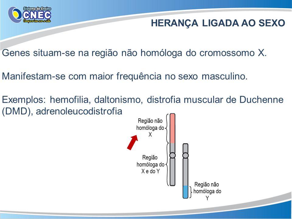 HERANÇA LIGADA AO SEXO Genes situam-se na região não homóloga do cromossomo X. Manifestam-se com maior frequência no sexo masculino. Exemplos: hemofil