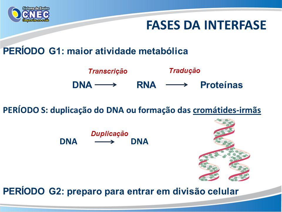 FASES DA INTERFASE PERÍODO G1: maior atividade metabólica DNA RNA Proteínas Transcrição Tradução Duplicação PERÍODO S: duplicação do DNA ou formação d