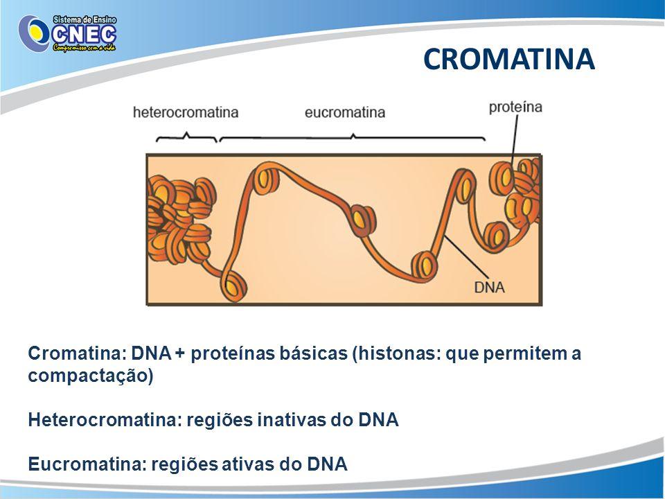CROMATINA Cromatina: DNA + proteínas básicas (histonas: que permitem a compactação) Heterocromatina: regiões inativas do DNA Eucromatina: regiões ativ