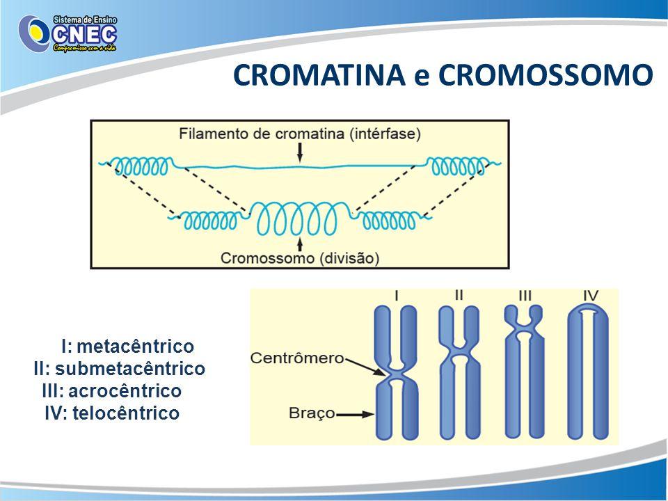 CROMATINA e CROMOSSOMO I: metacêntrico II: submetacêntrico III: acrocêntrico IV: telocêntrico
