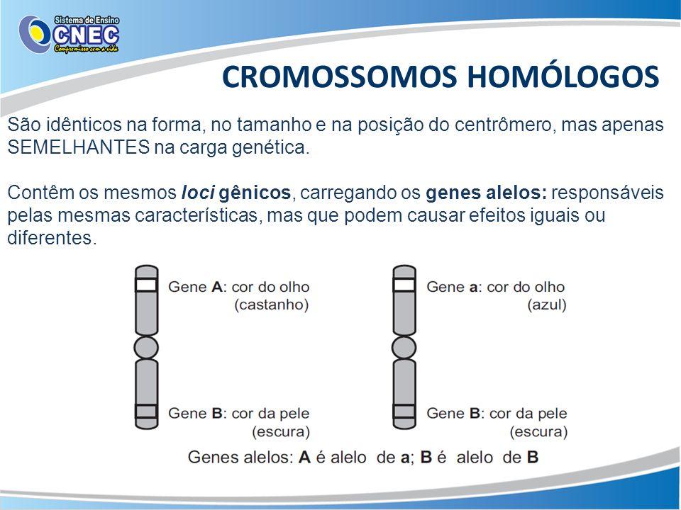 CROMOSSOMOS HOMÓLOGOS São idênticos na forma, no tamanho e na posição do centrômero, mas apenas SEMELHANTES na carga genética. Contêm os mesmos loci g