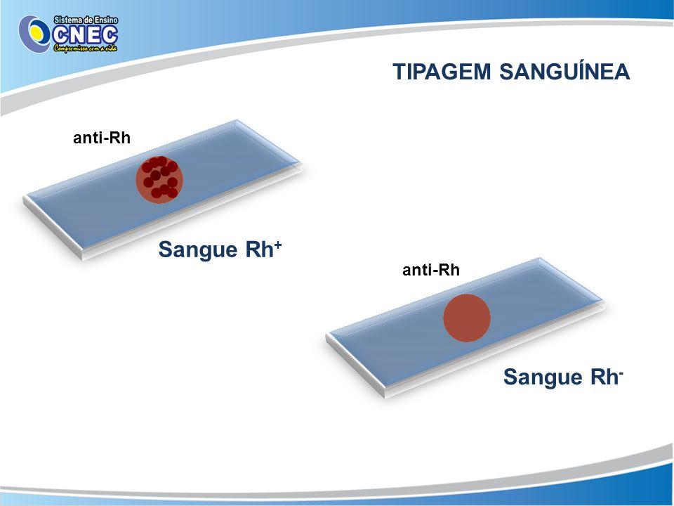 anti-Rh Sangue Rh + Sangue Rh - TIPAGEM SANGUÍNEA