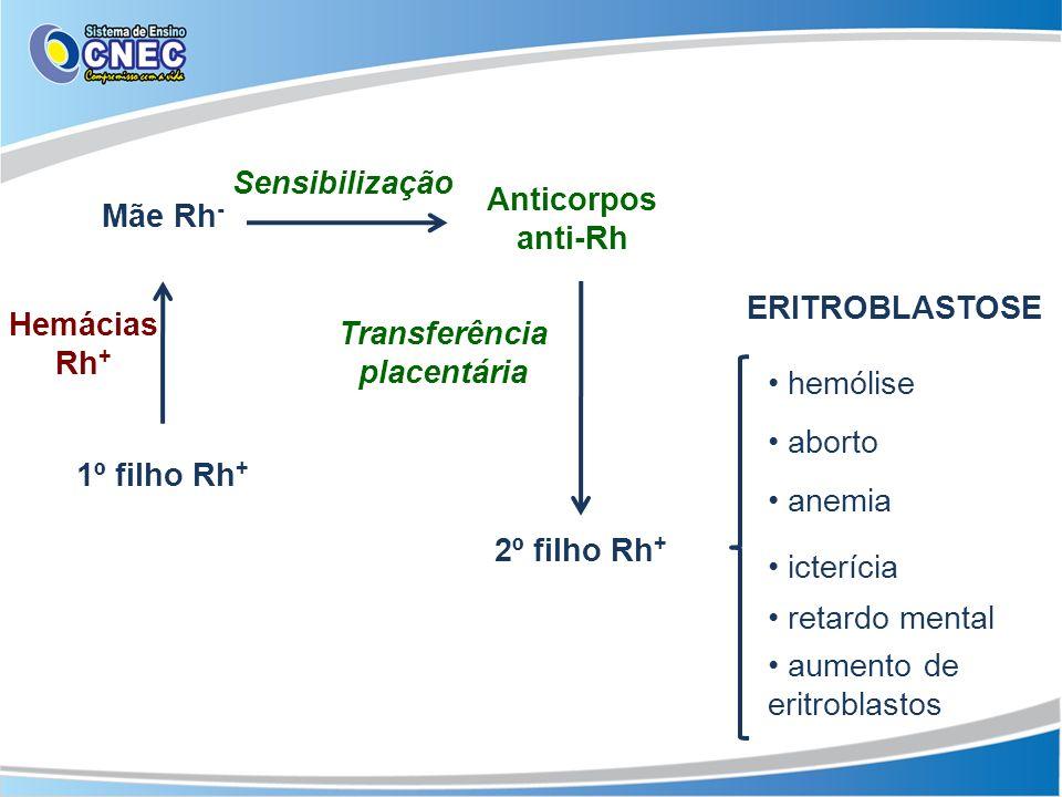 Mãe Rh - 1º filho Rh + Hemácias Rh + Sensibilização Anticorpos anti-Rh 2º filho Rh + Transferência placentária ERITROBLASTOSE hemólise aborto anemia i