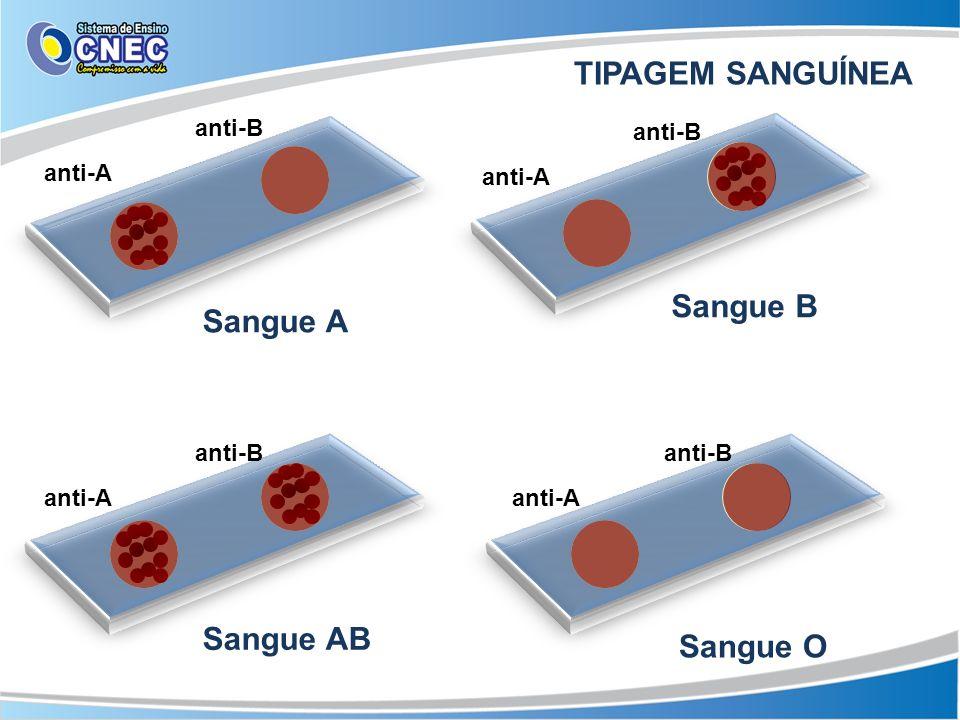 anti-A anti-B anti-A anti-B anti-A anti-B anti-A anti-B Sangue A Sangue B Sangue AB Sangue O TIPAGEM SANGUÍNEA