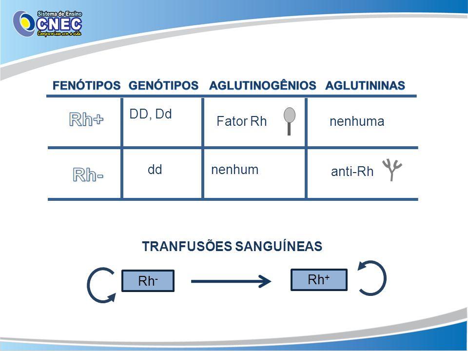 SANGUE Rh + Fenótipo: Rh + Genótipos: DD ou Dd Aglutinogênio: Rh Aglutinina: nenhuma SANGUE Rh - Fenótipo: Rh - Genótipos: dd Aglutinogênio: nenhum Aglutinina: anti-Rh