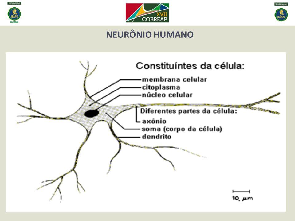 NEURÔNIO HUMANO.