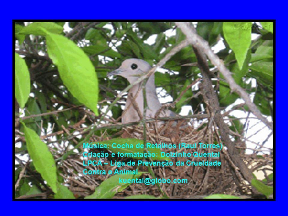 Música: Cocha de Retalhos (Raul Torres) Criação e formatação: Doizinho Quental LPCA – Liga de Prevenção da Crueldade Contra o Animal.
