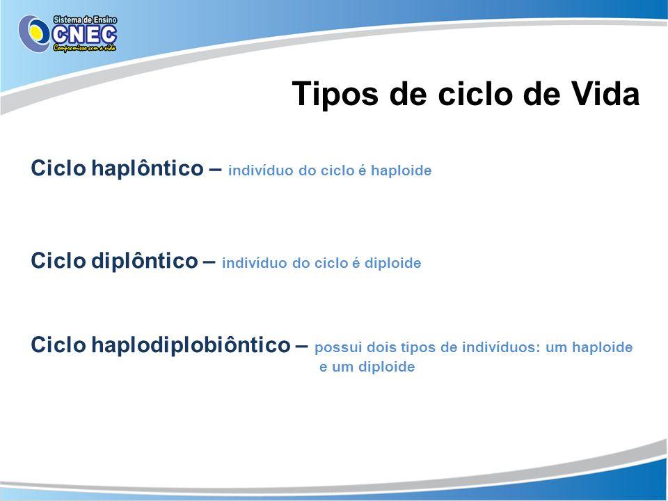 Tipos de ciclo de Vida Ciclo haplôntico – indivíduo do ciclo é haploide Ciclo diplôntico – indivíduo do ciclo é diploide Ciclo haplodiplobiôntico – po