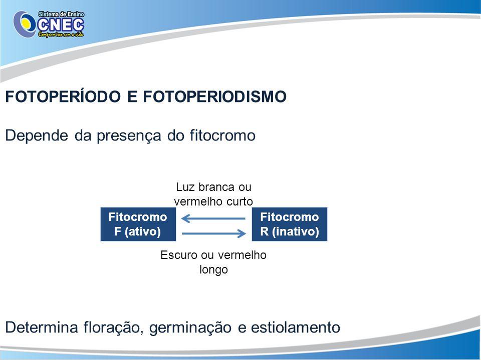 FOTOPERÍODO E FOTOPERIODISMO Depende da presença do fitocromo Determina floração, germinação e estiolamento Fitocromo F (ativo) Fitocromo R (inativo)