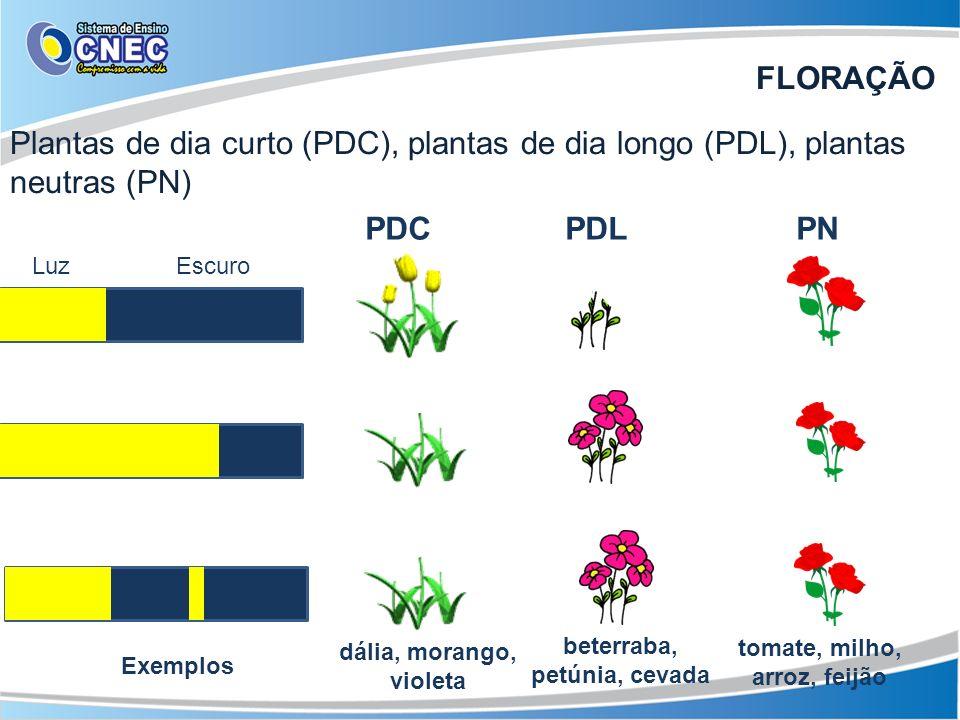 Plantas de dia curto (PDC), plantas de dia longo (PDL), plantas neutras (PN) PDC PDL PN LuzEscuro tomate, milho, arroz, feijão beterraba, petúnia, cev