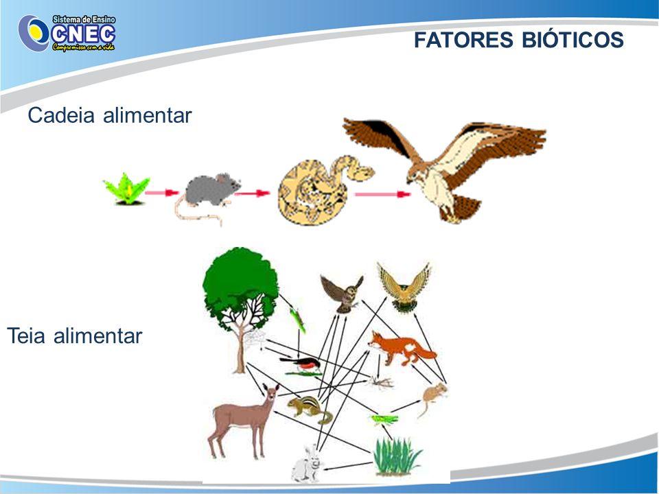FATORES BIÓTICOS Cadeia alimentar Teia alimentar