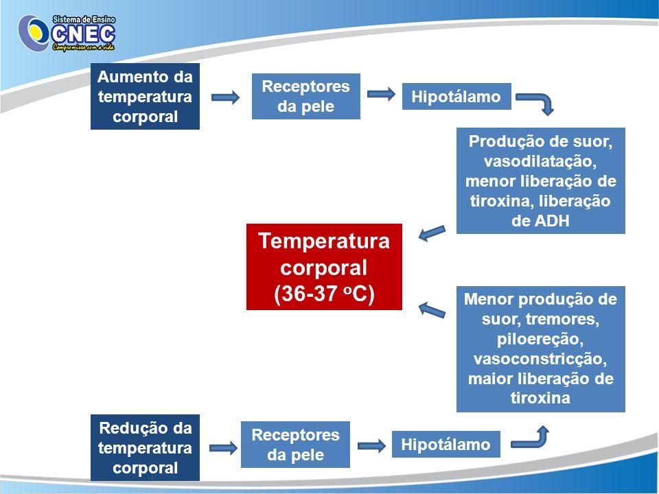 Aumento da temperatura corporal Receptores da pele Hipotálamo Produção de suor, vasodilatação, menor liberação de tiroxina, liberação de ADH Menor pro