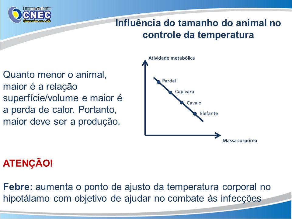 Quanto menor o animal, maior é a relação superfície/volume e maior é a perda de calor. Portanto, maior deve ser a produção. Influência do tamanho do a