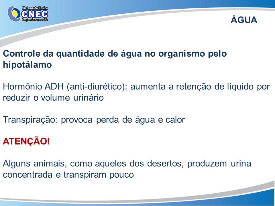 ÁGUA Controle da quantidade de água no organismo pelo hipotálamo Hormônio ADH (anti-diurético): aumenta a retenção de líquido por reduzir o volume uri