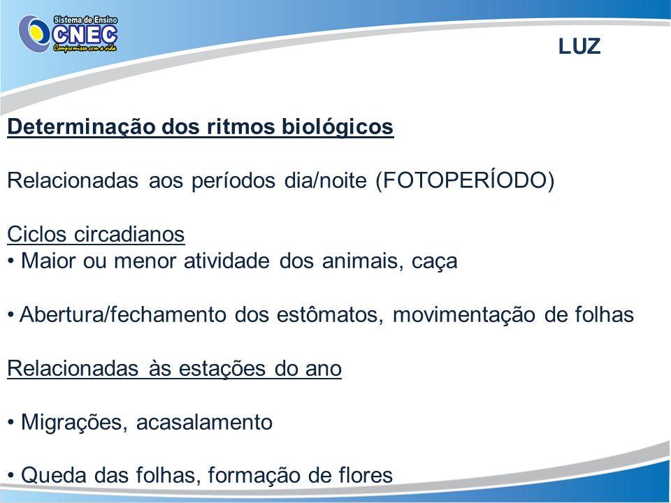 FOTOPERÍODO E FOTOPERIODISMO Depende da presença do fitocromo Determina floração, germinação e estiolamento Fitocromo F (ativo) Fitocromo R (inativo) Luz branca ou vermelho curto Escuro ou vermelho longo