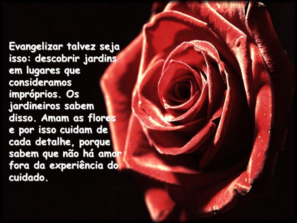 A cada dia, o jardineiro perdoa as suas roseiras.