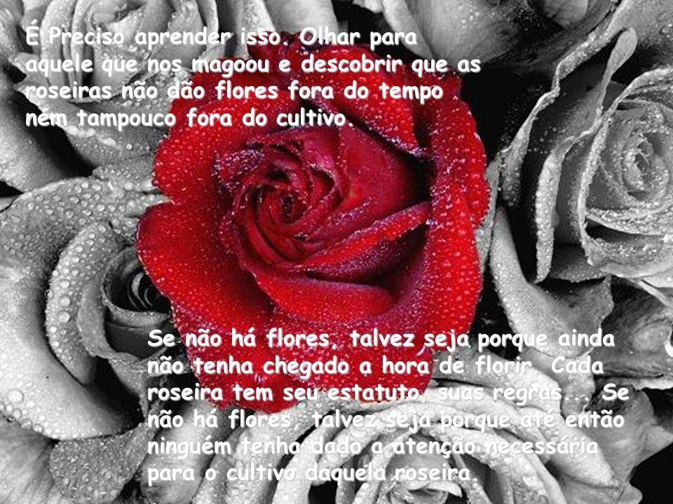 Se não há flores, talvez seja porque ainda não tenha chegado a hora de florir. Cada roseira tem seu estatuto, suas regras... Se não há flores, talvez