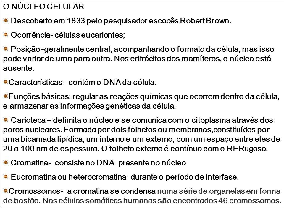O NÚCLEO CELULAR Descoberto em 1833 pelo pesquisador escocês Robert Brown. Ocorrência- células eucariontes; Posição -geralmente central, acompanhando