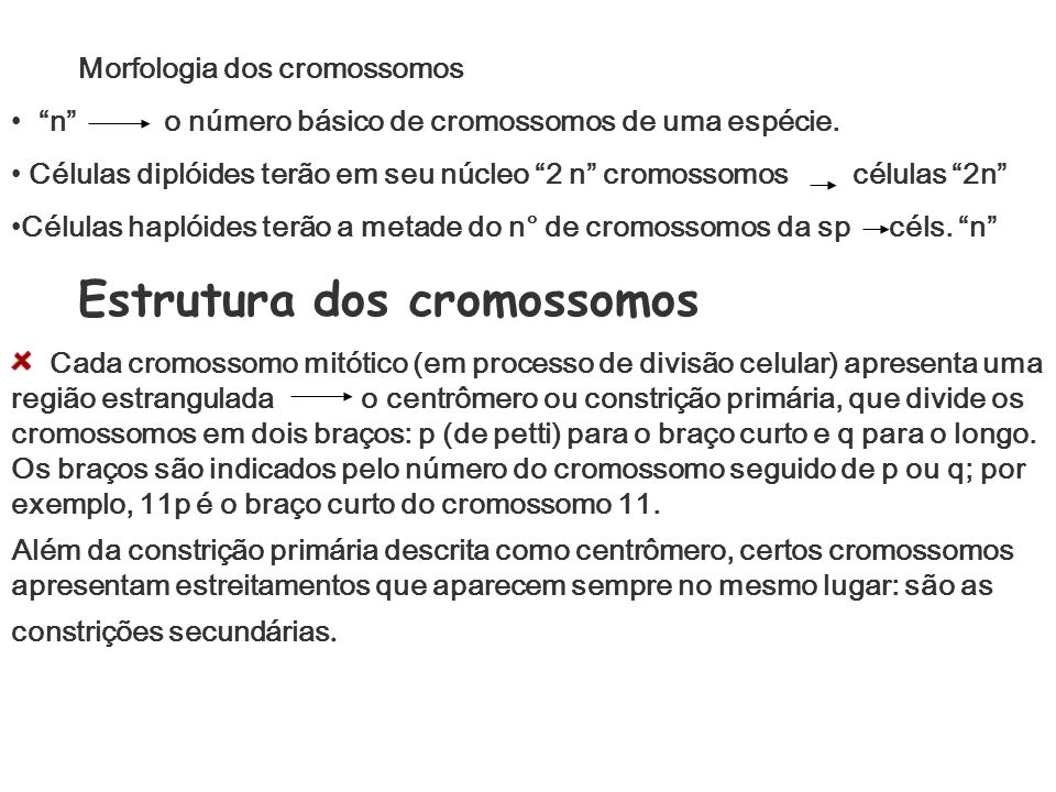Morfologia dos cromossomos n o número básico de cromossomos de uma espécie. Células diplóides terão em seu núcleo 2 n cromossomos células 2n Células h