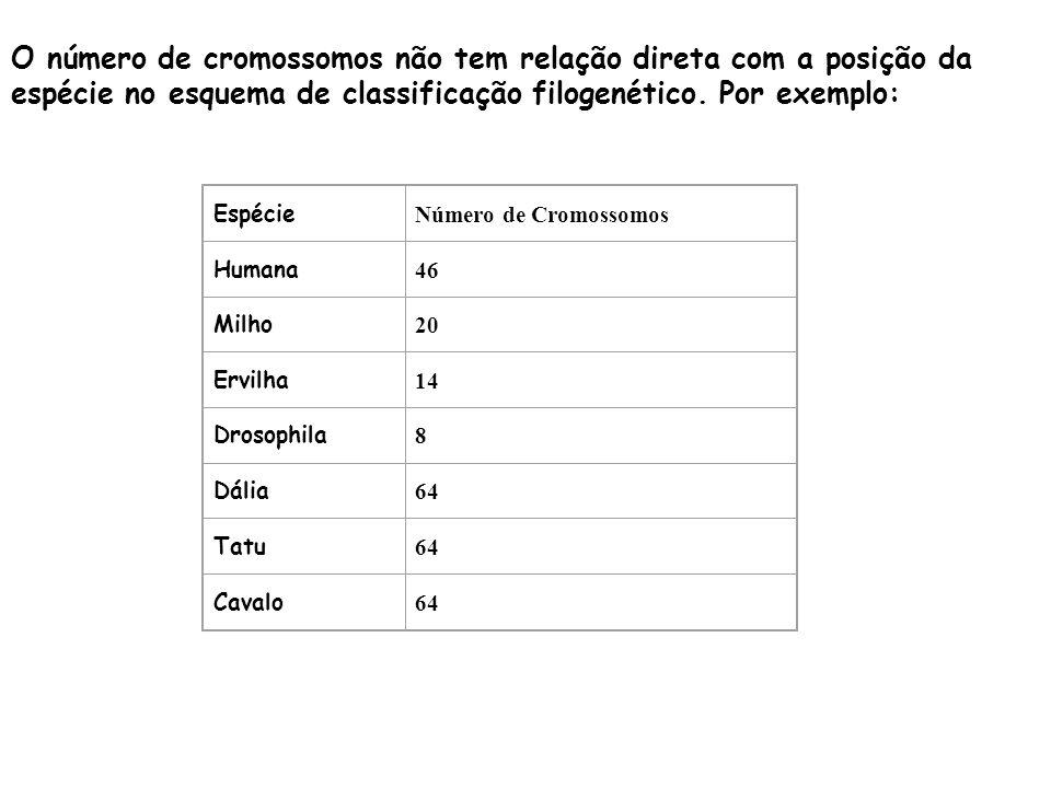 O número de cromossomos não tem relação direta com a posição da espécie no esquema de classificação filogenético. Por exemplo: Espécie Número de Cromo