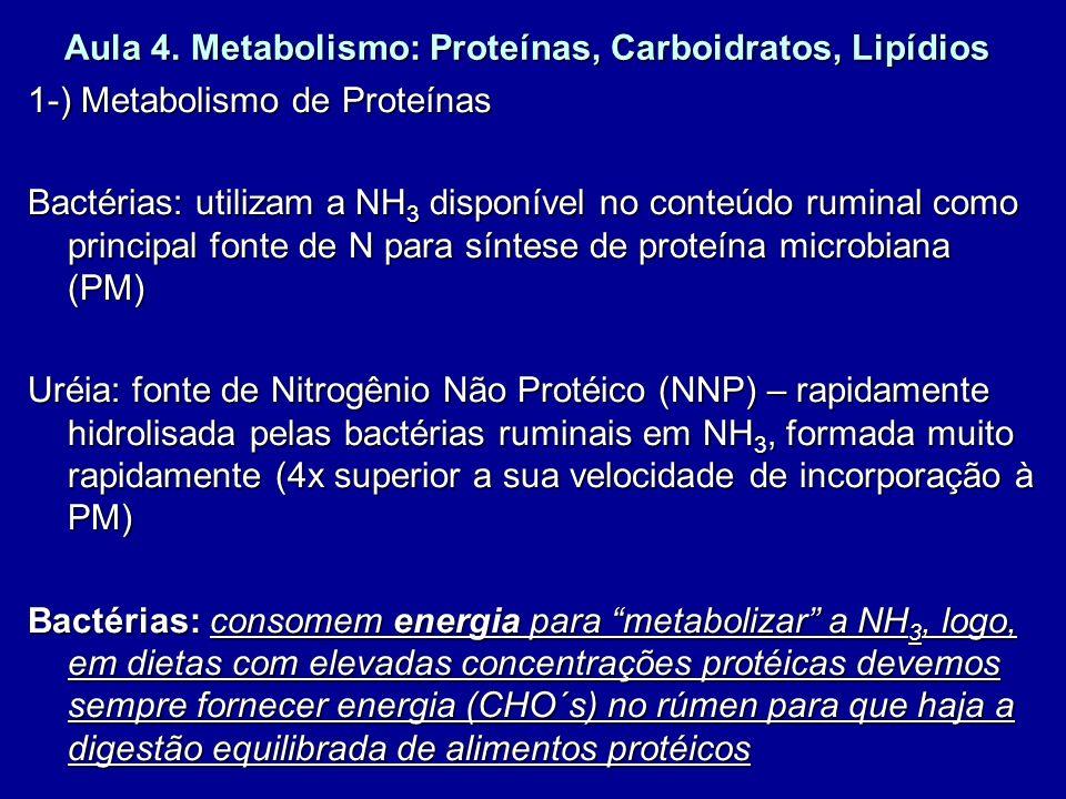 Aula 4. Metabolismo: Proteínas, Carboidratos, Lipídios 1-) Metabolismo de Proteínas Bactérias: utilizam a NH 3 disponível no conteúdo ruminal como pri
