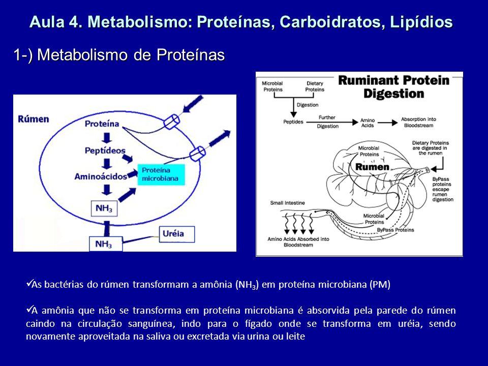 Aula 4. Metabolismo: Proteínas, Carboidratos, Lipídios 1-) Metabolismo de Proteínas As bactérias do rúmen transformam a amônia (NH 3 ) em proteína mic