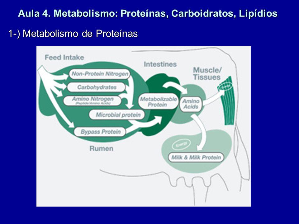 Aula 4. Metabolismo: Proteínas, Carboidratos, Lipídios 1-) Metabolismo de Proteínas